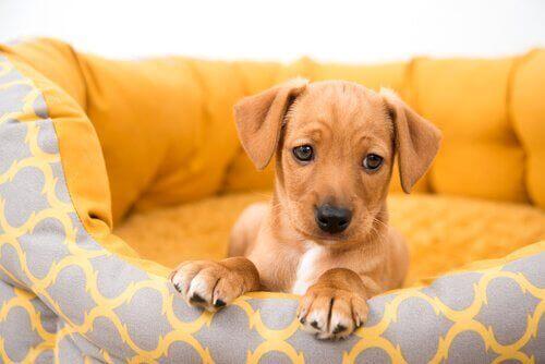 Köpek Satın Almak: Kişiden Köpek Satın Almanın Riskleri