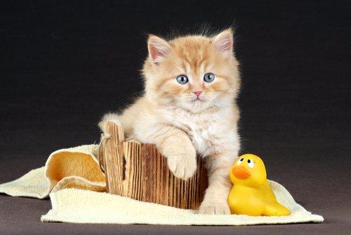 yaz aylarında kedi bakımı