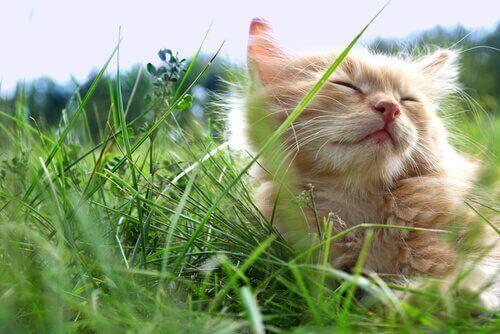 Yaz Aylarında Kedinizi Serin Tutmak İçin 3 İpucu