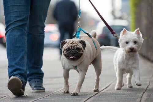 sokakta yürüyen köpekler