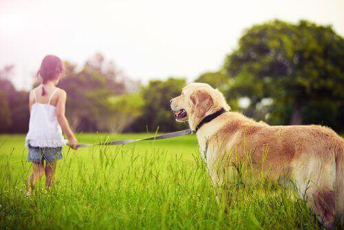 Çocuğunuz Evcil Hayvan İstediğinde