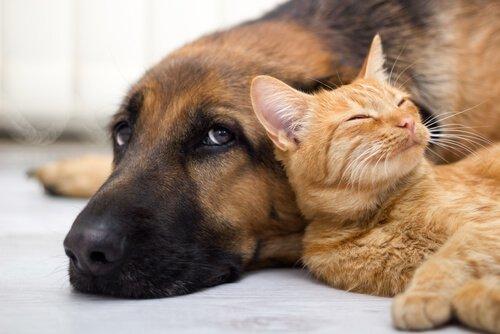 Arjantin: Kişi Başına En Çok Evcil Hayvan Düşen Ülke