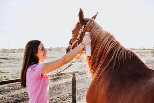 Atlarda Saçkıran Tedavisi