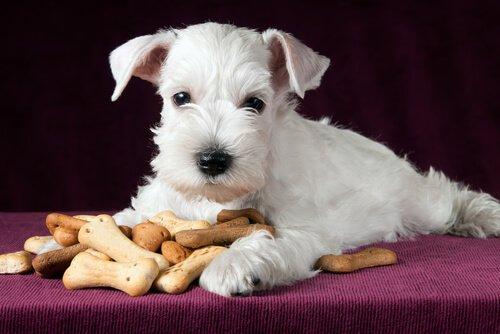 Köpeğiniz İçin Sağlıklı Atıştırmalıklar