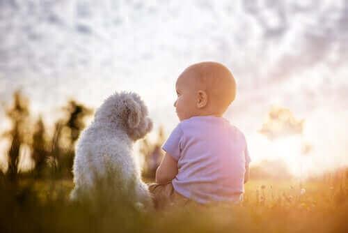 yanyana oturan bebek ve köpek