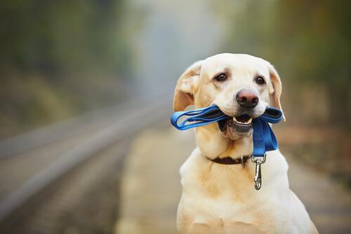 Köpeğinize Boyun Tasması Takma Yolları