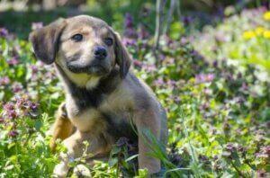Yeşillikte oturmuş bir köpek yavrusu