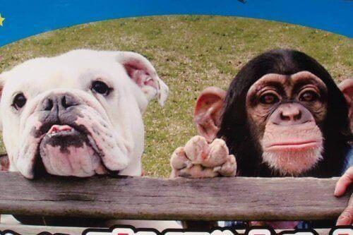 Ünlü Hayvanlar: Maymun Pankun ve Köpek James