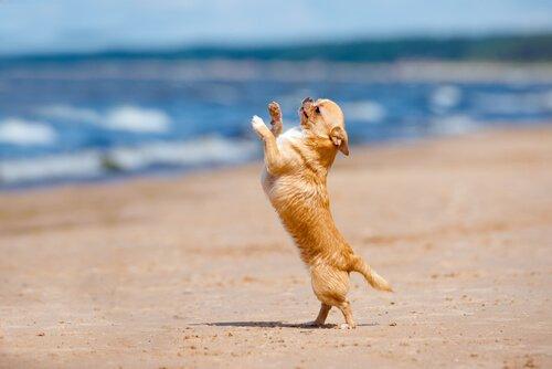 Dans Eden Köpekler Şovu