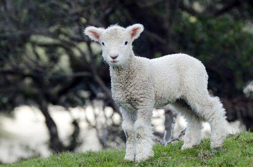 Vegan Kıyafetler: Hayvan İstismarı Karşıtı Kumaşlar