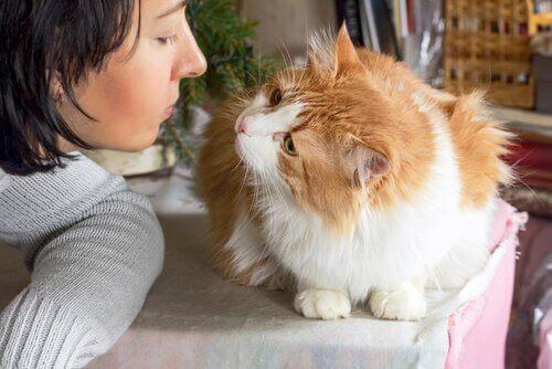 Dost Canlısı Bir Kedi Nasıl Yetiştirilir?