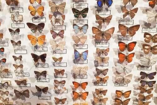CURLA Entomoloji Müzesi Hakkında Her Şey