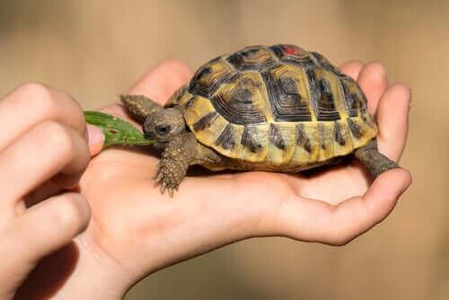 Ev Kaplumbağalarında Sık Görülen Sağlık Sorunları
