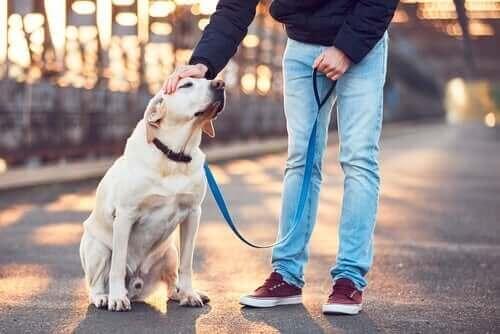 Evcil Hayvan Bakıcılığı: Birinin Evcil Hayvanına Bakmak için 6 Kural