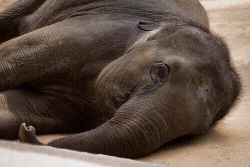 Fillerde Bakteriyel Hastalıklar