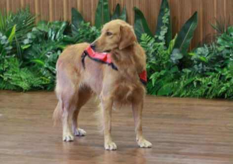 Happy İsminde Bir Köpek: Nereye Giderse Mutluluk Yayıyor