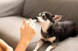 Köpeklere vitamin vermek sağlıklı mı?