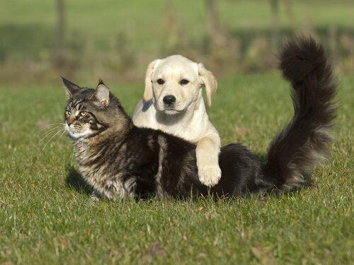 Evcil Hayvanlarda Cilt Yanığı Durumu