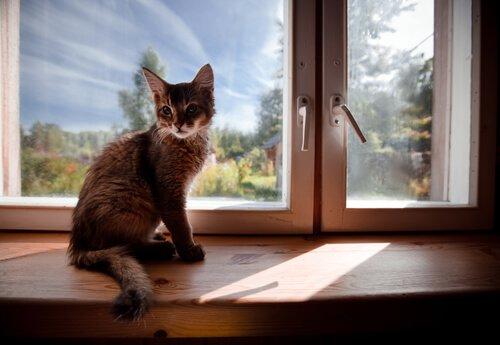 Kediniz İçin Nasıl Güvenli Bir Ev Yaratabilirsiniz?