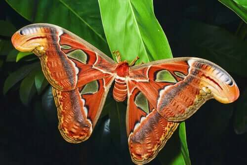 entomoloji müzesindeki kelebek türleri