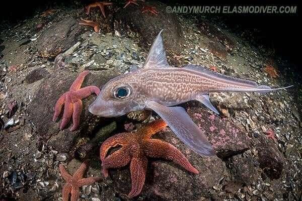 derin deniz kimerası fotoğraf