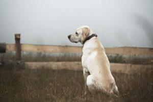 Kırlıkta tek başına oturmuş bir köpek