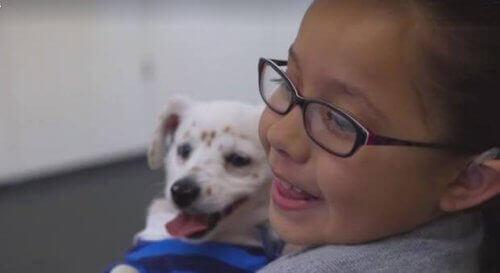 İşaret Dilini Anlayan Bir Köpek