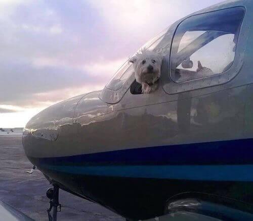 Binlerce Köpek Kurtaran Wings of Rescue İle Tanışın