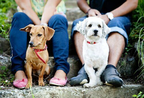 iki köpek