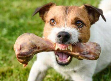Köpeklerde Yiyecek ile Bağlantılı Saldırganlık Nedir?