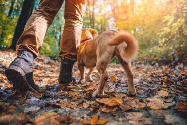 Doğa Yürüyüşüne En Uygun Köpekler