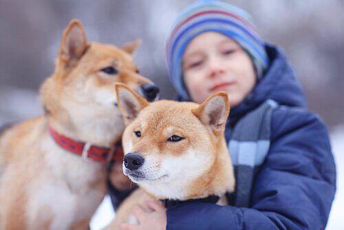 Yanında köpekler olan bir çocuk.