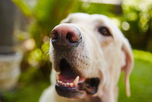 köpeklerde ağız sağlığı