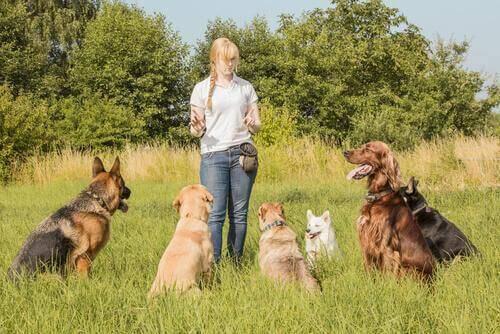 Çevrimiçi Hayvan Bakıcılarını Duymuş Muydunuz?