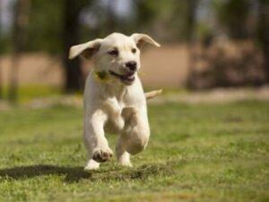 Ağzında çiçekle koşan bir köpek