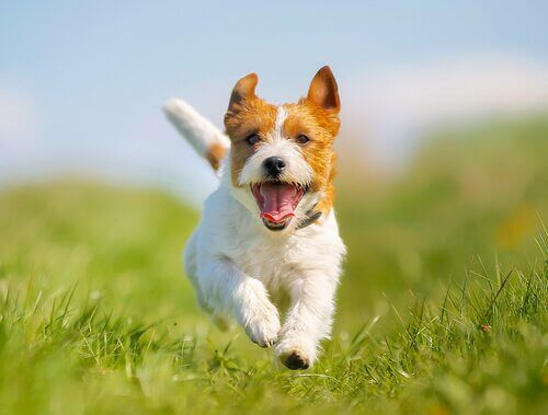 Köpeklerde Kabızlık Sorunu için Çözümler
