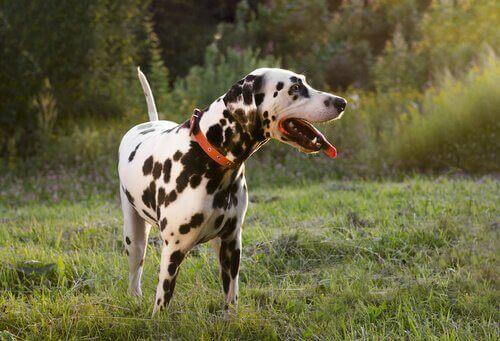 Köpekler Üzgünken de Kuyruk Sallar