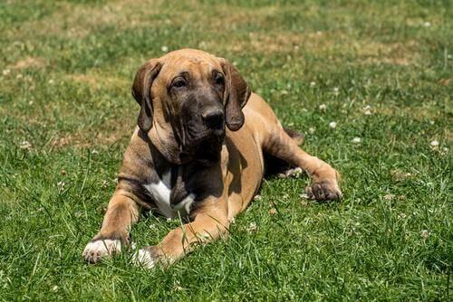 Latin Amerika İçin En Sevilen Evcil Hayvan - Köpekler
