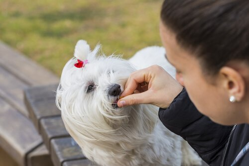 ödül maması yiyen köpek