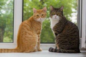 Meraklı bir kediniz mi var?