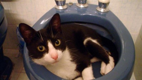 Kedi Muki ve İnanılmaz Hikayesi
