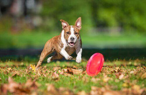Köpekler İçin En İyi Oyuncaklar