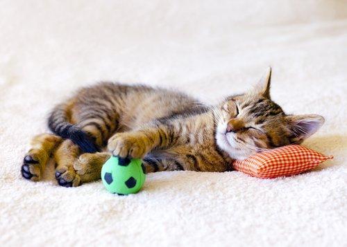 Minik yastığa kafasını koymuş eli topunda uyuyan kedi