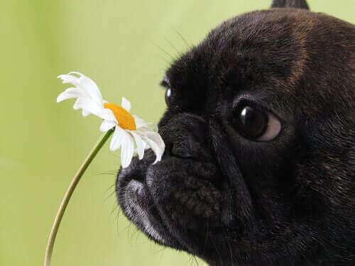 köpekler polenden hapşırır
