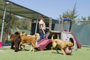 Parkta gezdirilen üç adet köpek