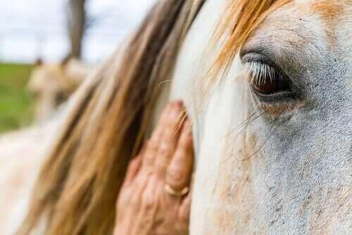 atlarda saçkıran