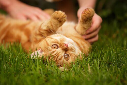 Kediler Sadık Dostlarınız Olabilir Mi?