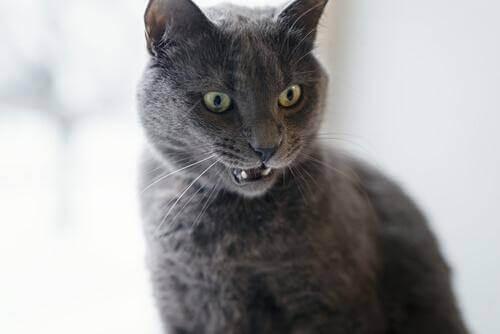 Kedinizin Sinirli Olduğuna Dair İşaretler