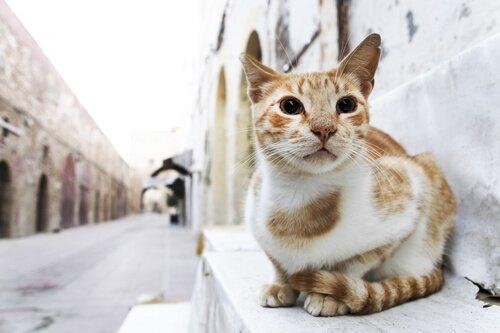 sarı sokak kedisi yerde oturuyor ve kediniz sinirli mi