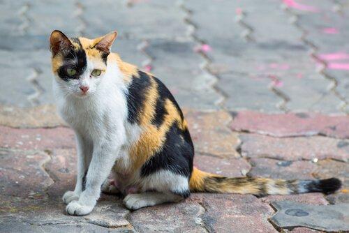 Terk Edilen Hayvanlar: Her 4 Dakikada Bir, Bir Kedi veya Bir Köpek Kayboluyor veya Terk Ediliyor